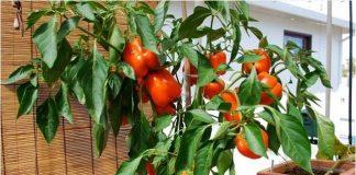10 mẹo trồng cây trong chậu không bao giờ thất bại!
