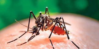 4 loại virus nguy hiểm ảnh hưởng tới thai nhi