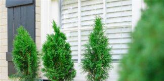 Chậu cây trang trí cửa sổ mang sắc xanh cho ngôi nhà bạn
