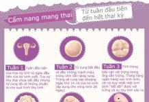 Mô tả chi tiết sự phát triển của bé từ tuần đầu tiên đến hết thai kỳ