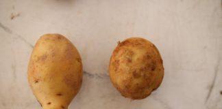 nông sản Đà Lạt,nông sản Trung Quốc,nông sản đội lốt,phân biệt rau quả,tiêu điểm,củ quả nào của Trung Quốc,rau củ quả trung quốc,rau quả Đà Lạt