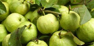 Mách bạn phương pháp giảm cân hiệu quả bằng trái ổi