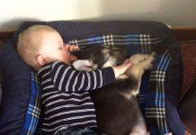 Những bằng chứng cho thấy trẻ con rất cần có … cún cưng