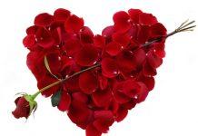 """Mẹo chữa bách bệnh từ cây """"hoa tình yêu"""""""