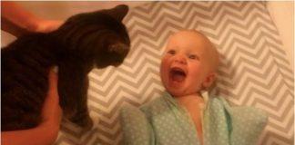 Clip vui: Bé không thể phấn khích hơn khi chơi với mèo