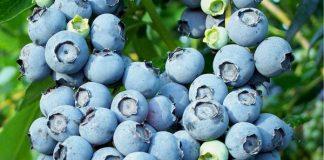 8 thực phẩm giúp con bạn có bộ não khỏe mạnh