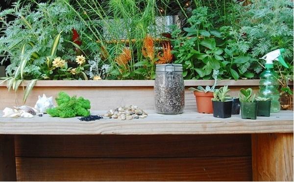 3 cách giúp bạn tự tin trồng cây mọng nước tại nhà