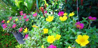 10 chậu hoa trồng đẹp nhất ở ban công
