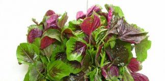 Tăng chiều cao hiệu quả nhờ 8 loại rau củ nhiều canxi