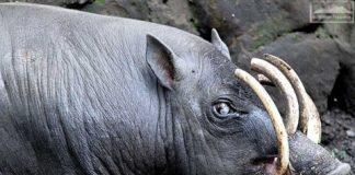 Những loài động vật kỳ dị nhất thế giới khiến bạn hết hồn