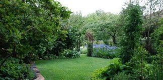 Sức mạnh của những bãi cỏ trong việc làm duyên sân vườn 1