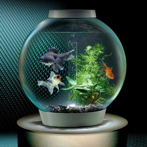 Cách bài trí bể cá theo phong thủy hút tài lộc cho gia chủ