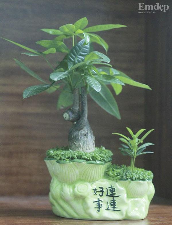 5 loại cây cảnh để bàn vừa có tác dụng phong thủy, vừa làm đẹp không gian nhà