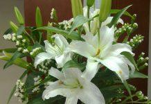 Tìm hiểu ý nghĩa của hoa ly tinh khiết, quý phái - 1