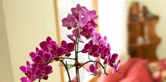 Tô điểm cho nhà bằng cây hoa Giáng sinh - Archi