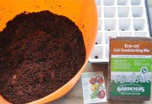 Cách trồng cà chua siêu nhanh vào mùa hè 1