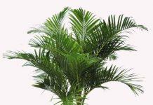 Điểm danh các loại cây cảnh trồng trong nhà 'trên cả tuyệt vời' 1