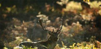 Khám phá 10 điểm du lịch tuyệt đẹp mùa thu - 1