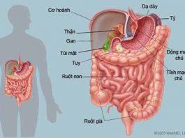 Những cách tăng cường sức khỏe đường ruột - 1