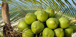 Bí quyết làm đẹp bất ngờ của nước dừa - 2
