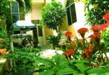Hướng dẫn sắp xếp, bài trí cây xanh trong nhà để thu hút vận may