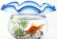 4 cách bài trí bể cá hợp phong thủy