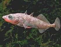 Loài cá nào thông minh nhất?