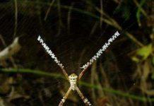 Giải mã bí mật của mạng nhện