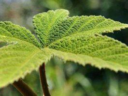 Thực vật biết nhận thức và giao lưu với con người