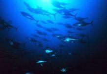 Các đàn cá biển có thể phục hồi vào năm 2026