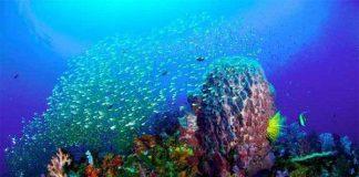 San hô biển Việt Nam đang bị hủy diệt nghiêm trọng