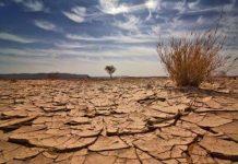 Ký sinh trùng có nguy cơ tuyệt chủng do biến đổi khí hậu