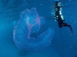 """""""Vật thể"""" hình ống phát sáng khiến thợ lặn bối rối"""