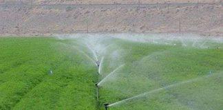 Ứng dụng công nghệ tưới phun mưa tại đảo Lý Sơn
