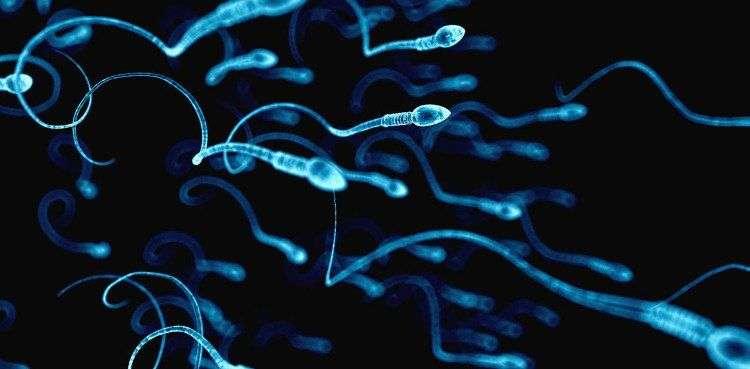 Công thức toán học xác định được cách tinh trùng đàn ông bơi như thế nào