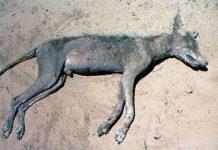 Sự thật bất ngờ về quái thú hút máu gia súc