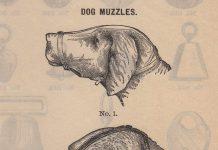 Hóa ra luật bắt rọ mõm cún cưng khi ra đường đã xuất hiện từ thời cổ đại