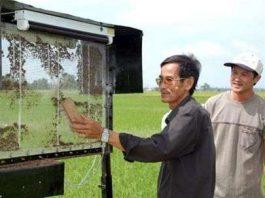 Nông dân chế tạo máy diệt rầy