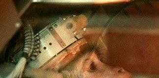 Iran sẽ đưa khỉ lên vũ trụ