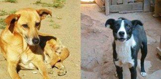 Chó sói được thuần hóa nhờ ăn thức ăn thừa của người