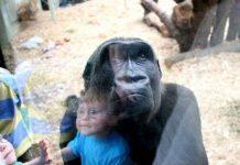 Vì sao con người chậm lớn hơn tinh tinh?