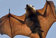 Động vật mang trong mình ít nhất 320.000 loài virus nguy hiểm