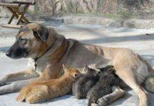 Сhó bắt mèo con về nuôi