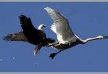 Trận chiến ngoạn mục trên không