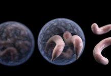 """Quên cá mập đi, 5 vi khuẩn này còn khiến bạn """"sống dở chết dở"""" hơn nhiều"""