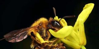 Phát hiện virus thảm sát loài ong mật ở Mỹ