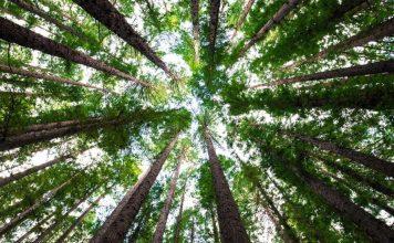 Trái Đất vẫn còn chỗ cho 1 nghìn tỷ cây xanh, nếu trồng đủ chúng ta sẽ ngăn được biến đổi khí hậu - Ảnh 1.